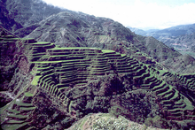 "The Banaue Rice Terraces in Ifugao, The Philippines. Source: McCouch S: ""Diversifying Selection in Plant Breeding."", Public Library of Science Journal, 2/10/2004. The PLoS website states that the content of all PLOS journals is published under the Creative Commons Attribution 2.5 license, unless indicated otherwise."