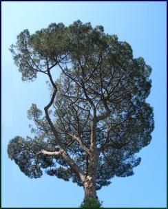 half-tree-1011710-m