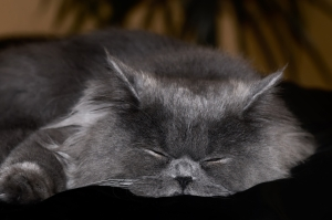 sleeping-cat-1288401-m