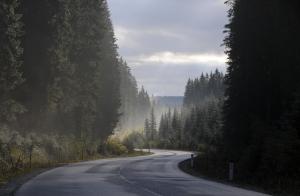 autumn morning road