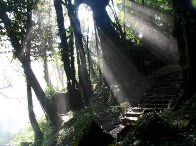 Lost Stairway by FreeImages.com/Michel Meynsbrughen
