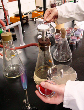 photo of lab work