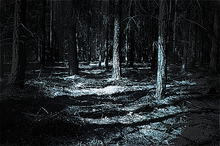 colorized version of Magical Forest At Night by Image Credit: Photo by Katerina Štepánková