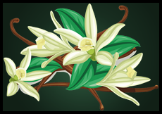 vanilla flowers vector image by sunshine 91