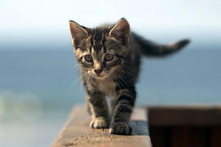 Cute Kitten on Window Ledge